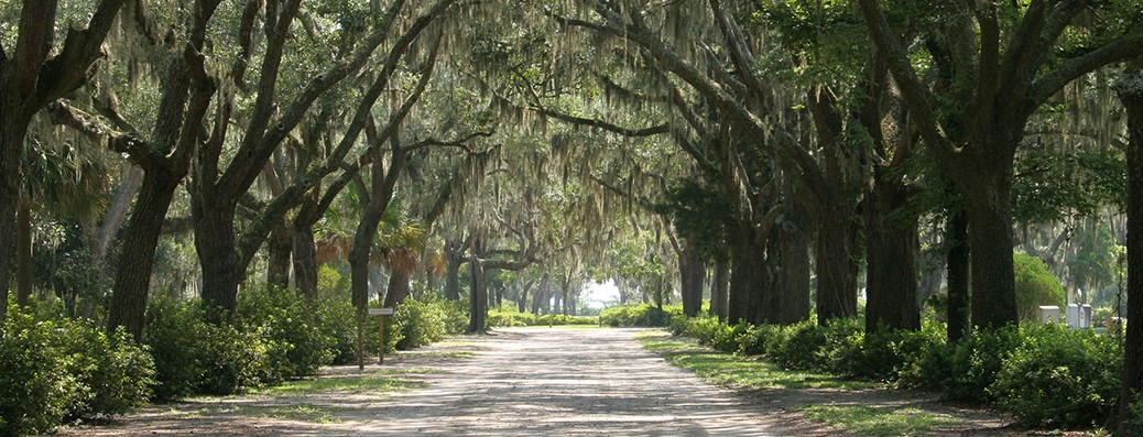 live-oak-lane